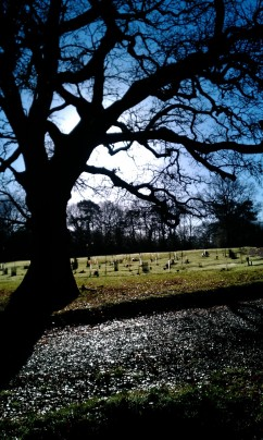 Morning sunlight over the burial ground